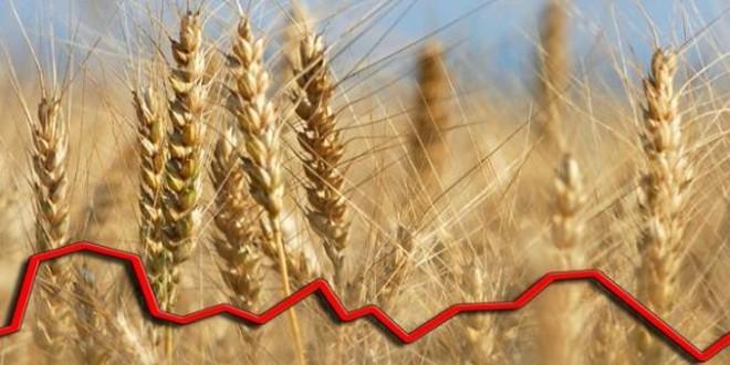 Cel mai mare trader autohton anunță prețurile de achiziție la grâu, orz, rapiță și mazăre