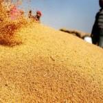 România vinde grâu în Egipt pe bandă rulantă