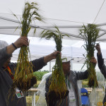 Seminar BASF dedicat culturilor de cîmp. Reportaj foto