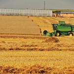 Grâul românesc are prognozată cea mai mare productivitate din istorie. Recolte în creștere în Franța, Germania și Marea Britanie