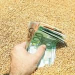 Seceta crește prețul grâului calitativ