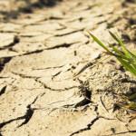 Măsurile pentru susținerea agricultorilor afectați de secetă au intrat în vigoare