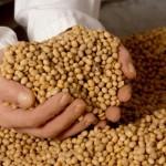 Se aşteaptă o scădere a producţiei de soia în Argentina