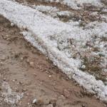Peste 150 ha de livezi afectate de grindină. Foto