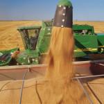 Canada: scădere drastică a stocurilor de grâu