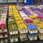 Olanda, cel mai mare exportator de produse agroalimentare din UE