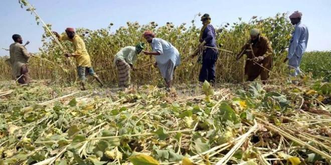 Uleiurile vegetale dau un imbold de creștere indicelui FAO pentru prețurile alimentelor
