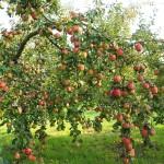 Ministerul Agriculturii din Rusia a propus reducerea TVA la fructe