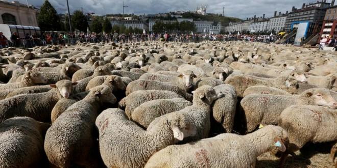 Protest cu mii de oi în centrul orașului Lyon din Franța