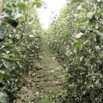 Lista companiilor care pot exporta în Rusia material săditor viticol şi pomicol
