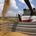 Luptă pe piața mondială a grâului: UE versus Rusia