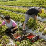 Două proiecte noi în valoare de 800 000 USD pentru fermierii autohtoni