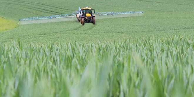 Agricultura fără pesticide: costuri mai mari cu 153% la mere, 80% – la grâu și cu 121% – la porumb