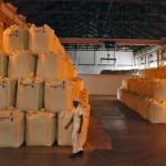 FAO anunță cele mai mari stocuri mondiale de cereale și porumb din ultimii 16 ani
