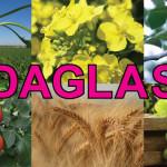 DAGLAS – îngrășământ lichid cu o concentrație ridicată de azot, potasiu și sulf