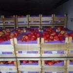 Încă o partidă de mere moldovenești interzisă în Federația Rusă