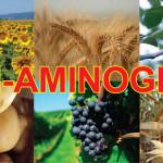 Aminograin – biostimulator cu aminoacizi