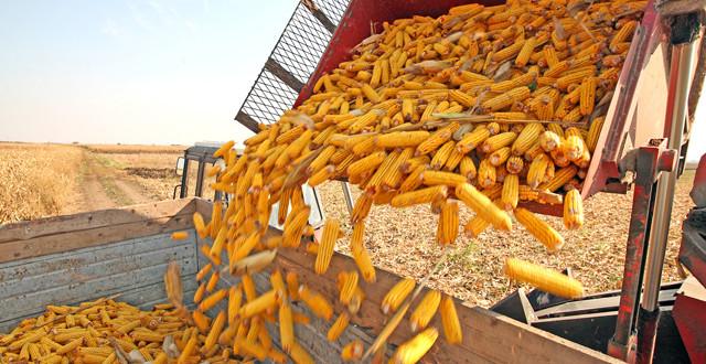 România a exportat în 9 luni aproape 8 milioane tone de cereale