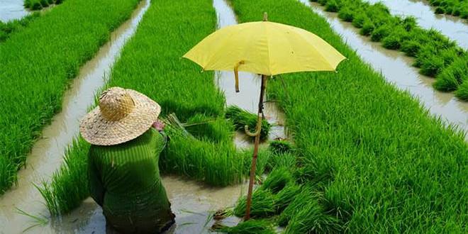 Indicele FAO pentru prețurile alimentelor crește a doua lună consecutiv: creșterea a fost determinată de prețurile la grâu și la porumb