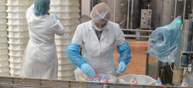 Colectăm anual peste 60 mii tone de lapte de la 25 de ferme şi de la peste 5000 de producători individuali