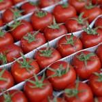 tomate-turcia