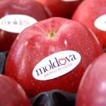 Crește exportul de fructe