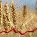 Crește prețul grâului