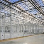 BASF investește 50 mln Euro într-un centru de selecție a castraveților din Olanda
