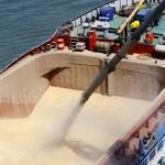 Rusia vizează noi piețe de grâu, tradițional aflate sub influența SUA și UE