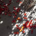 FAO va sprijini Republica Moldova în reducerea risipei de alimente