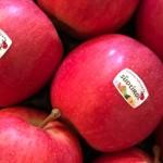 Prețurile en-gros la mere în Italia