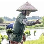 Indicele FAO pentru prețurile la alimente a scăzut în noiembrie