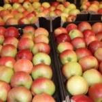 Cîți struguri și mere autohtone se păstrează în frigidere?