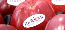Combaterea bolilor de depozit la mere