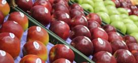 Moldova a exportat în Federația Rusă fructe în valoare de 200 mln de dolari