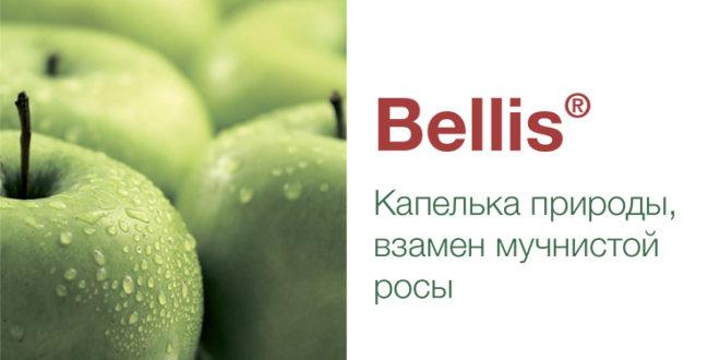 Bellis – надежность, широкий спектр защитного действия до и после сбора урожая