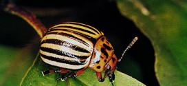 Alverde – инсектицид для борьбы с вредителями овощных культур и картофеля