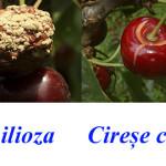 cires-colaj1