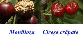 Cum să protejăm recolta de cireșe?