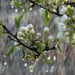 ploaie-primavara2