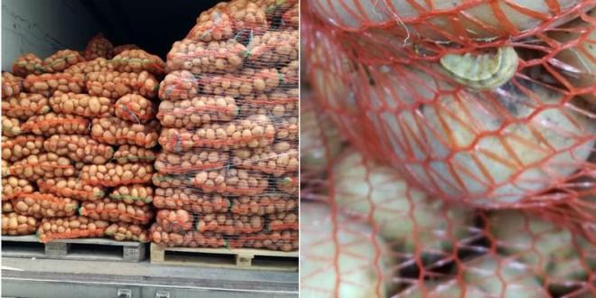 ANSA a returnat un lot de 21 de tone de cartofi din România care urma să ajungă în magazinele din țară. Ce au depistat inspectorii?