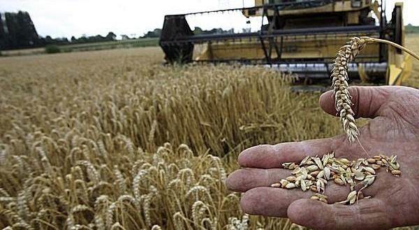 UE – perspectivele agricole pe termen scurt