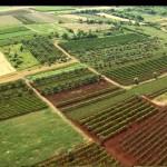 Croația le interzice străinilor să cumpere terenuri agricole