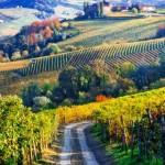 Viticultorii italieni au nevoie de peste 100.000 de muncitori sezonieri pentru recoltare și sunt disperați din cauza carantinei: Plătim noi testele