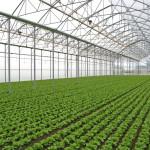 """32 de afaceri urmează să fie lansate în sectorul agricol prin """"Proiectul – subvenţii în avans pentru Start-upuri"""""""
