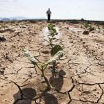 Peste 2 milioane de hectare distruse de secetă în România: agricultorii solicită amânarea ratelor la credite