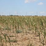 Proiectul privind măsurile de susținere a agricultorilor, remis FMI spre avizare