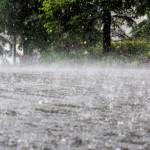 Prognoza meteo: revin ploile