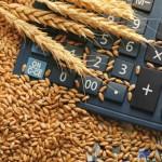 Prețul grâului – în creștere la nivel mondial. Presiune mare pe stocurile din UE