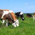 Republica Moldova ar putea construi un complex modern de gestionare a subproduselor de origine animală